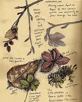 nature diary